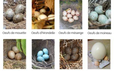 Première chasse aux œufs !