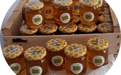 La vie des ruches à la ferme…