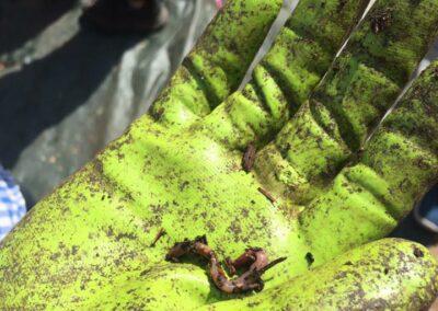 vers rouge du lompricomposteur à la ferme de la croix-rousse à lyon 4